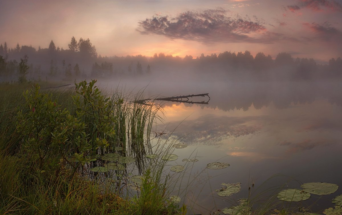 Landscape, Болото, Озеро, Пейзаж, Питер, Рассвет, Туман, Таня She (Aiya)