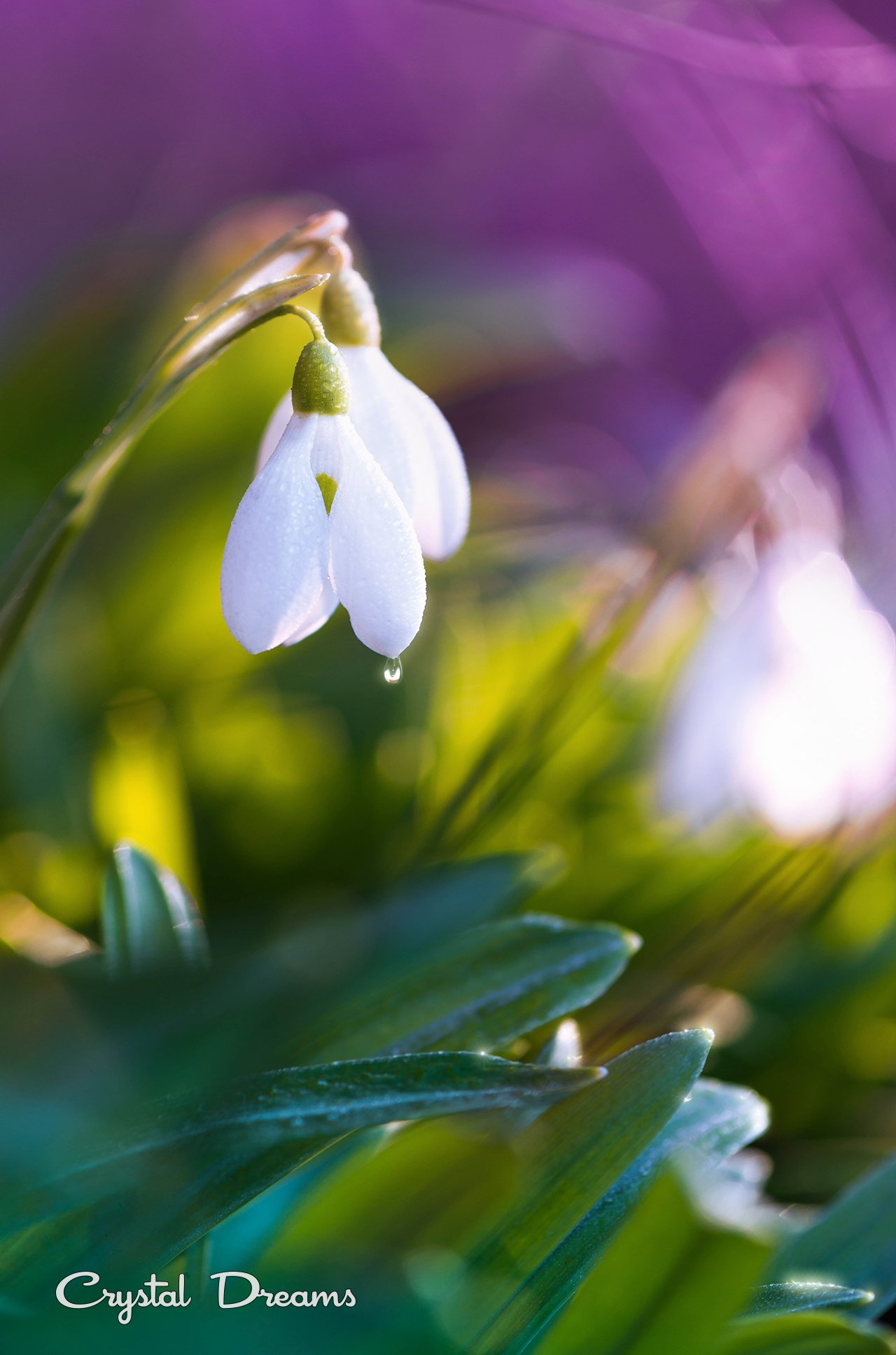 nature, crystal dreams, color, spring, Крылова Татьяна