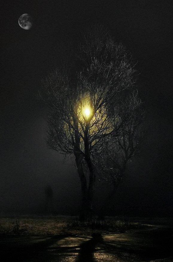wake,mood,night,time,secrets,moon,alone,, Emerald Wake ©
