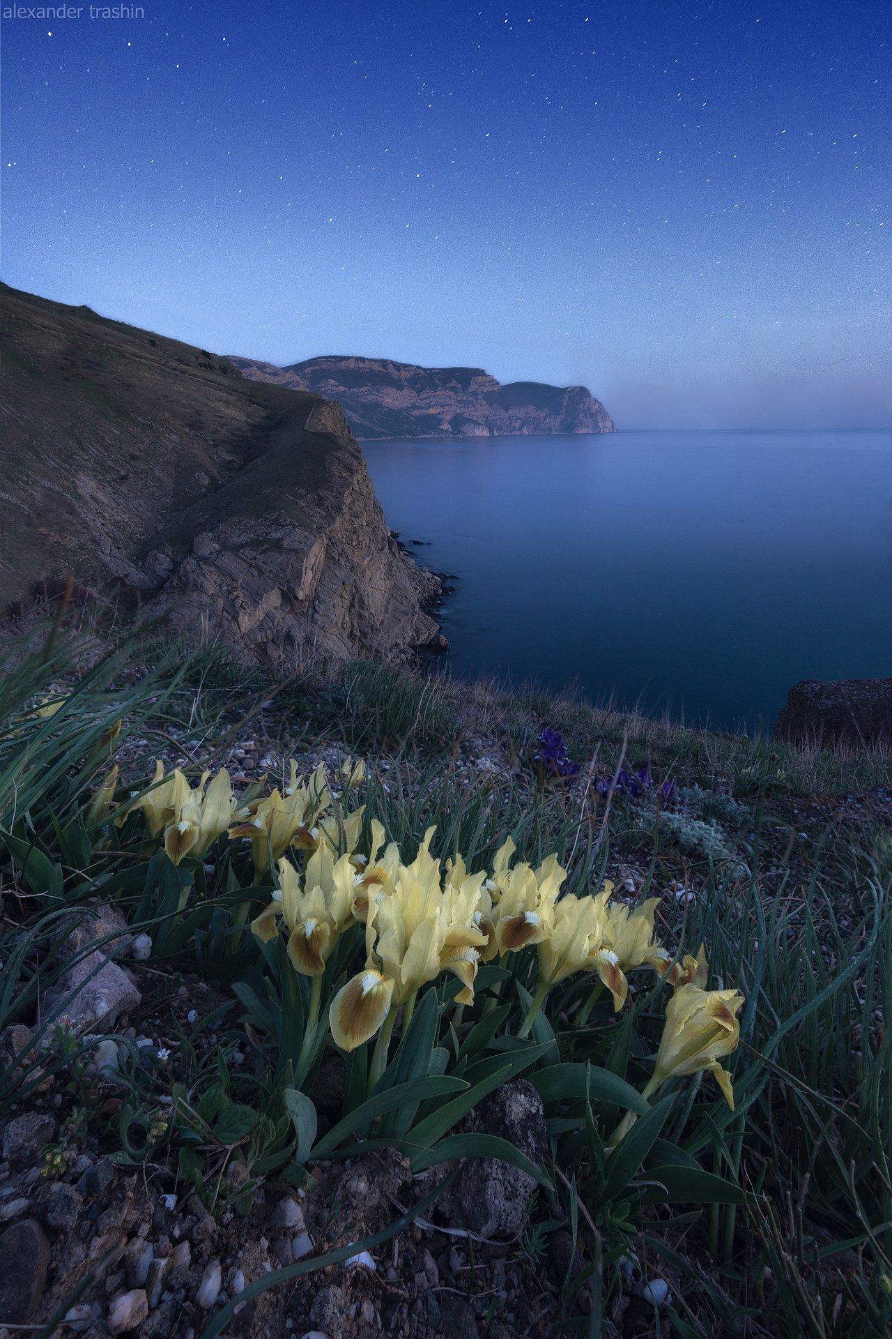 балаклава, крым, весна, пейзаж, ирисы, Александр Трашин