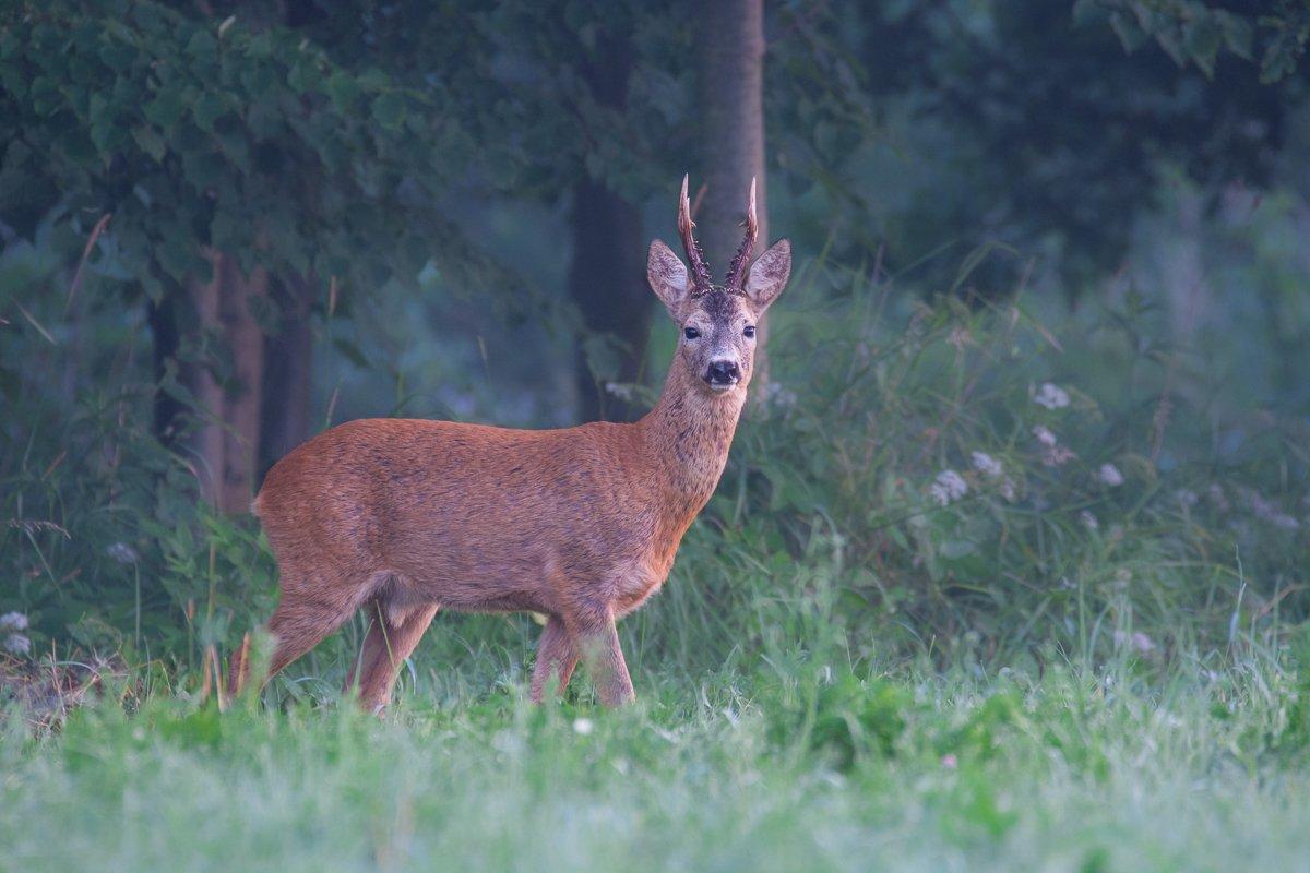 deer , Filip Stefaniak