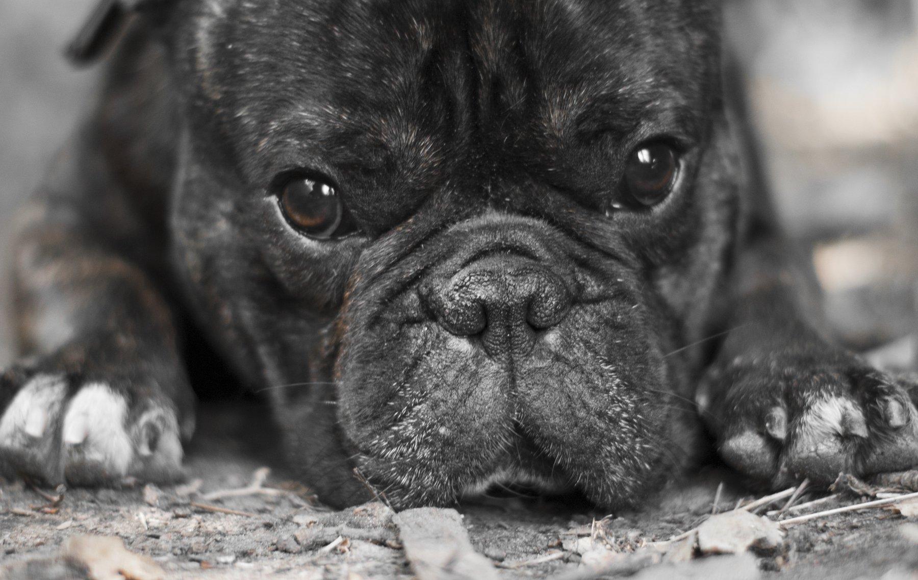 #dog, Kirill Golovan
