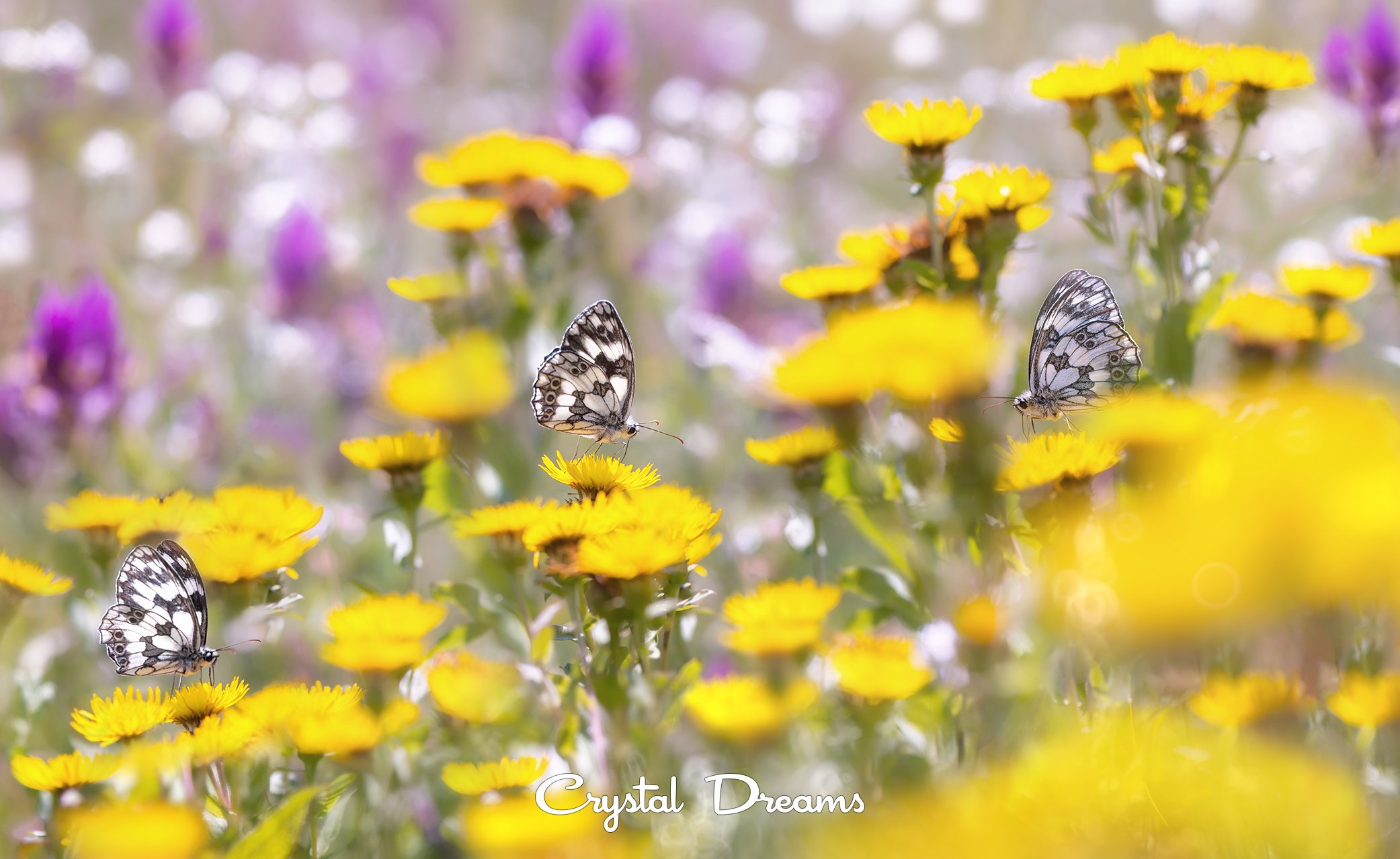 crystal dreams, macro, summer, color, art, nature, butterfly, Крылова Татьяна