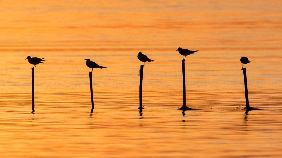 gold, birds, seaguls, , Filip Stefaniak