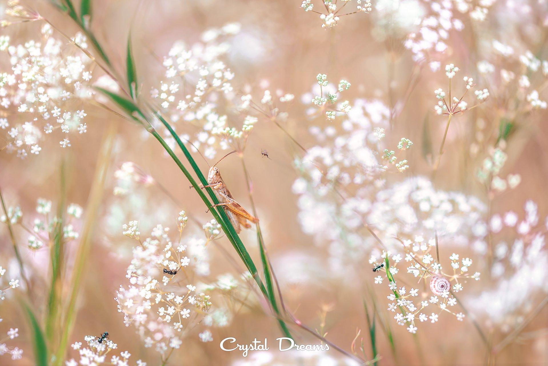 crystal dreams, macro, spring, color, art, nature, кузнечик, Крылова Татьяна