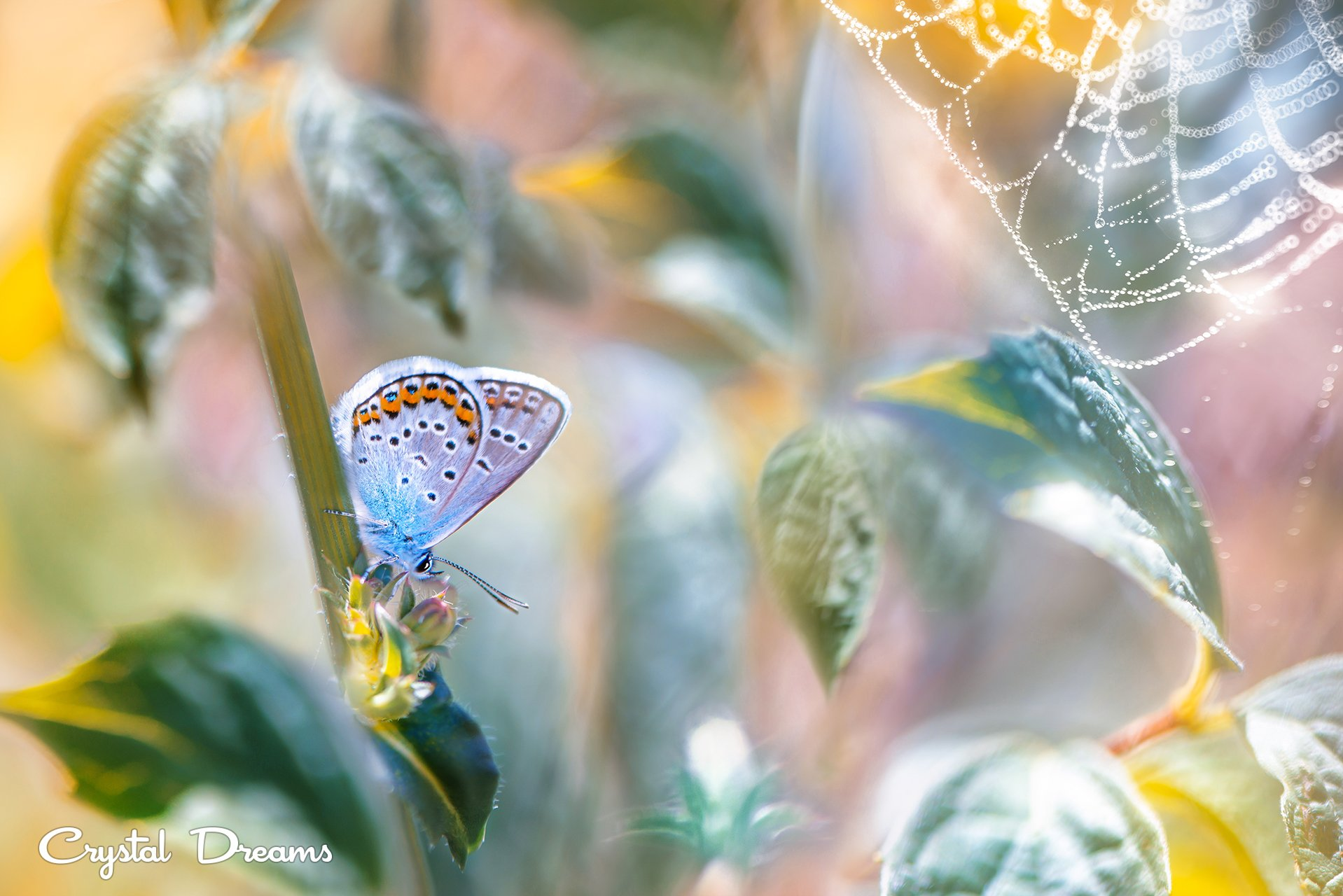 crystal dreams, macro, summer, color, art, nature, butterfly, Крылова Татьяна