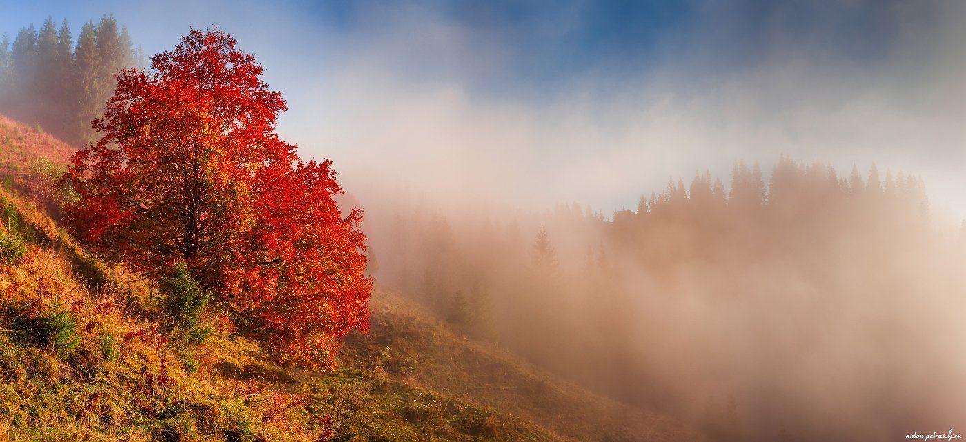 рассвет, туман, карпаты, горы, осень, Антон Петрусь