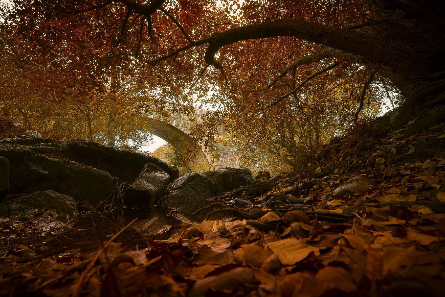 autumn, fall, brown, orange, leaves, reflections, colors, Antonio Bernardino