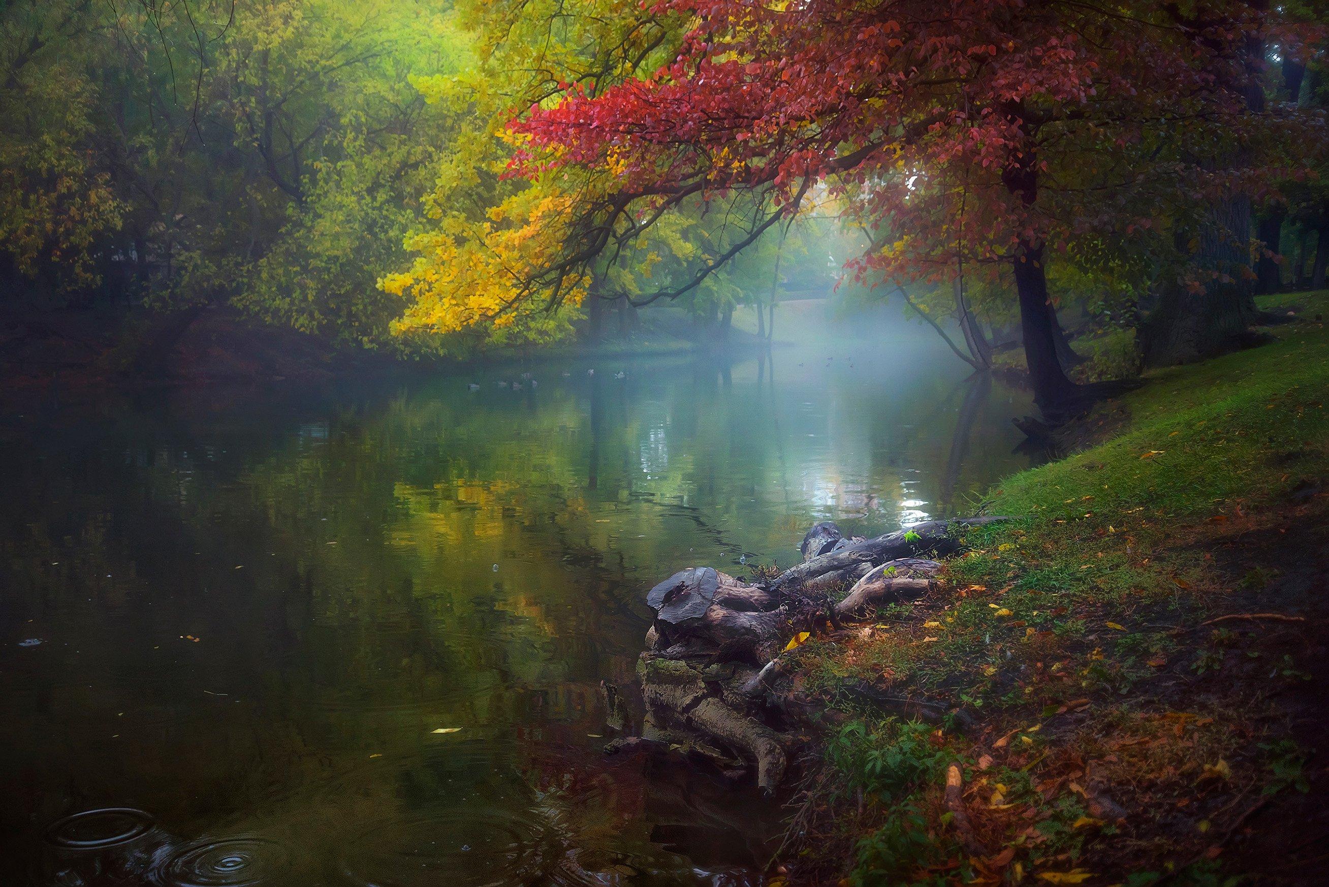 саратов, парк, осень, озеро, отражение, пень, туман, Алексей Ермаков