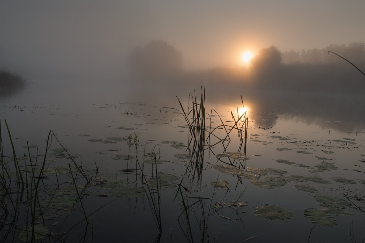россия, природа, река, угра, смоленская область, август, 2017, рассвет, туман, nikon, пейзаж,  утро, солнце, рассвет, Денис Щербак