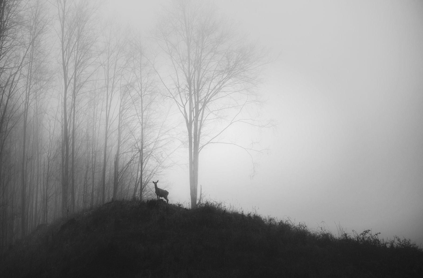 wildlife, landscape, black&white, nature, природа, пейзаж, animals, deer, Genadi Dochev
