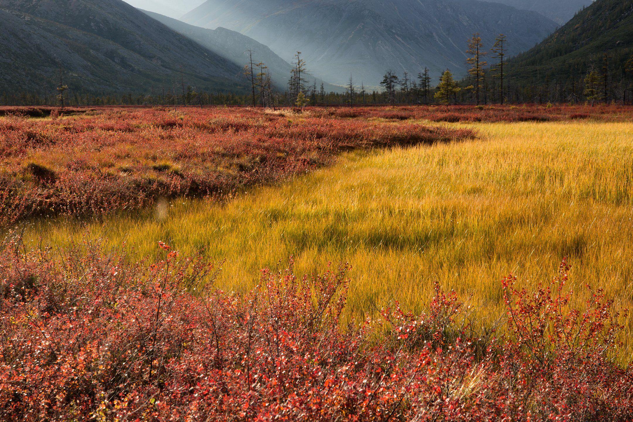 осень, колыма, болото, даль, горы, свет, деревья, цвет, Антон Селезнев