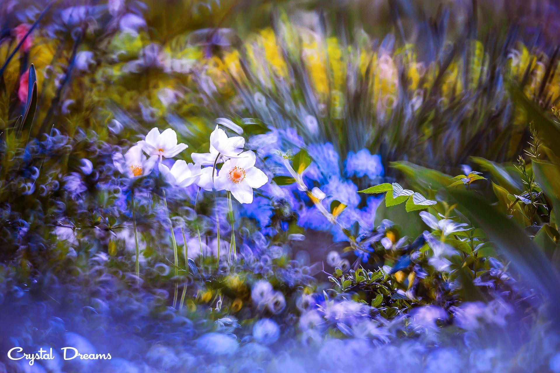 crystal dreams, macro, summer, color, art, nature,, Крылова Татьяна