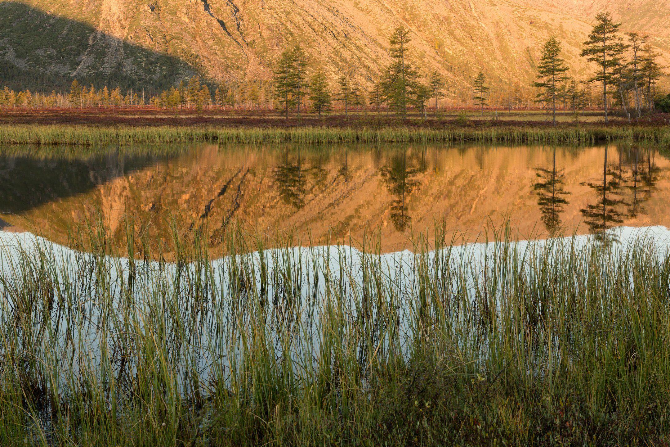 озеро, рассвет, тишина, отражение, деревья, трава, утро, горы, колыма, дальний восток, антон селезнев, осень, Антон Селезнев