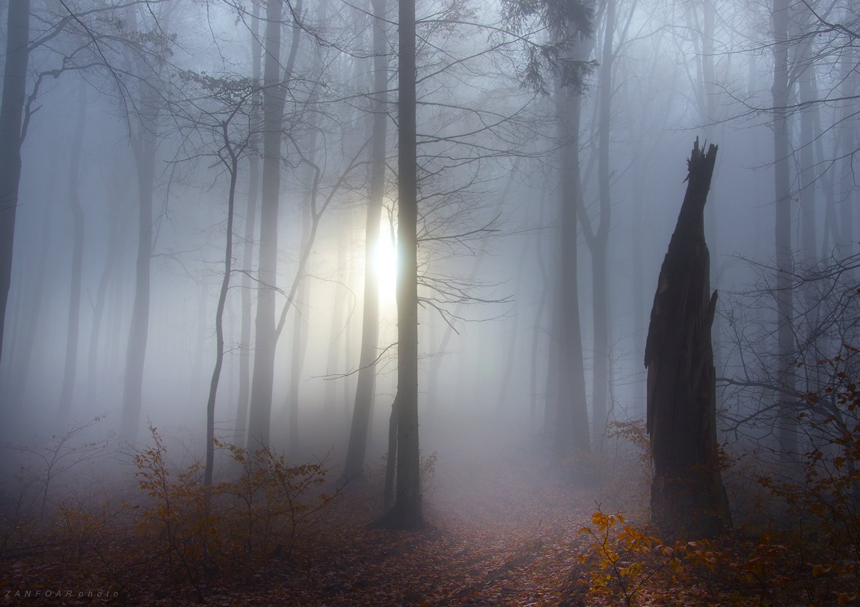 осень, туман, хриби,проникновение света,туман, вуаль, туман, лес, буки, осень, дымка, солнце,zanfoar,czech republic, Zanfoar