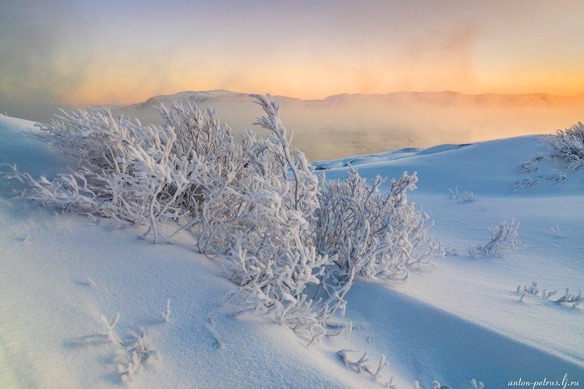 териберка, зима, море ,снег, зима, рассвет, Антон Петрусь