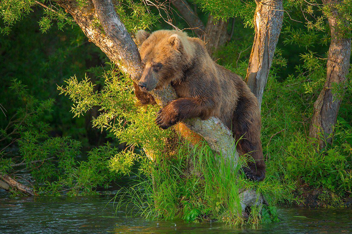 Камчатка, медведь, лето, природа, путешествие, животные, рыбалка, закат, Денис Будьков