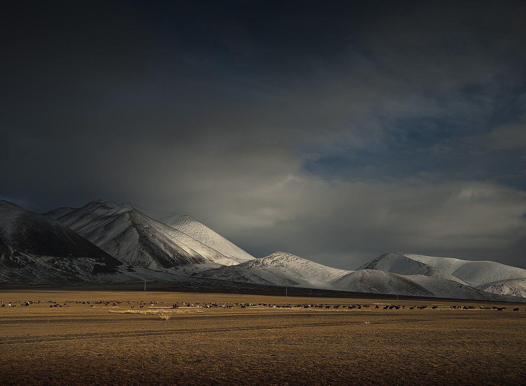монголия, осень, горы, Olga  Wolkova