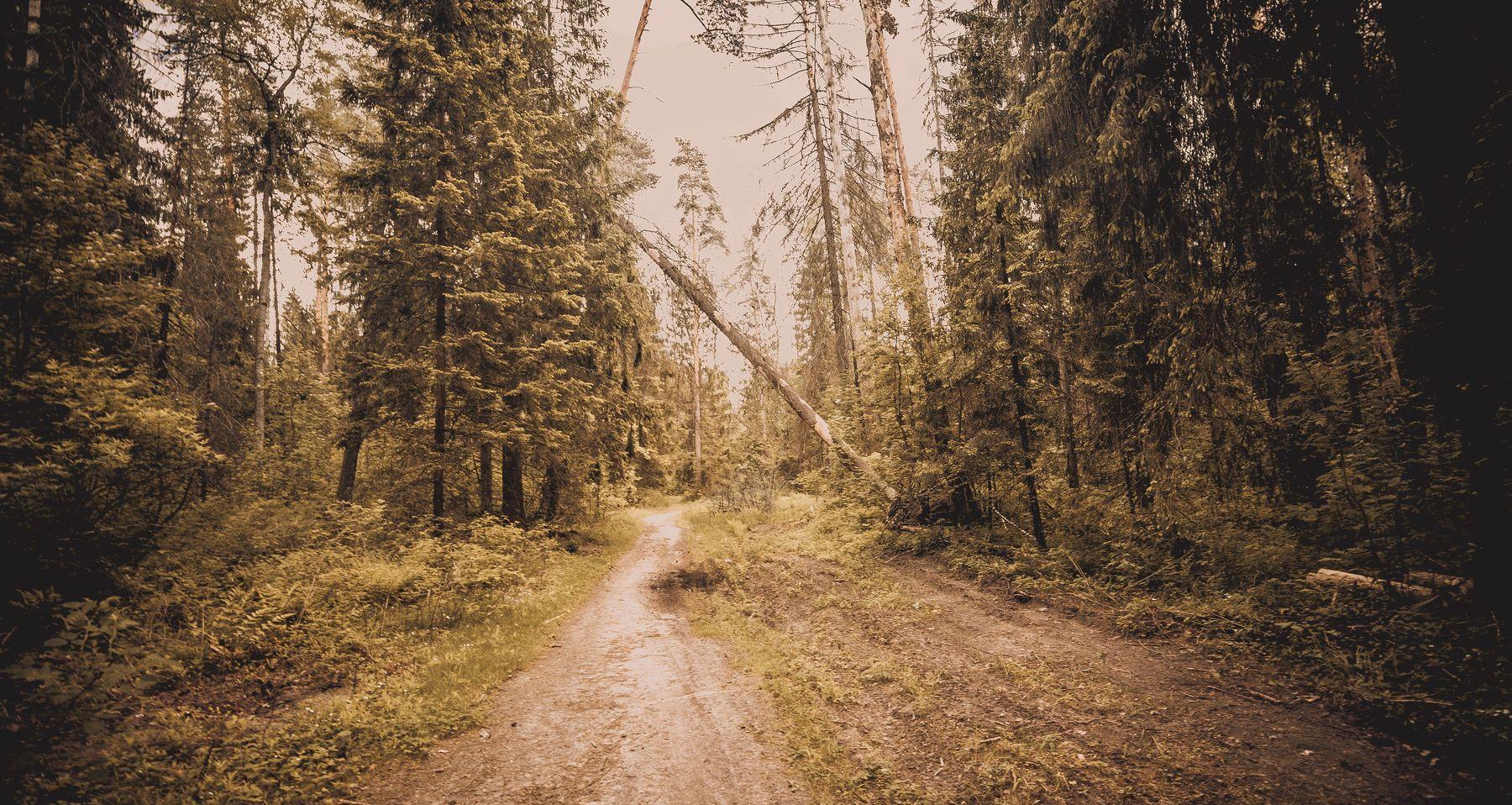 пейзаж, природа, , дорога, деревья, лес, Василий