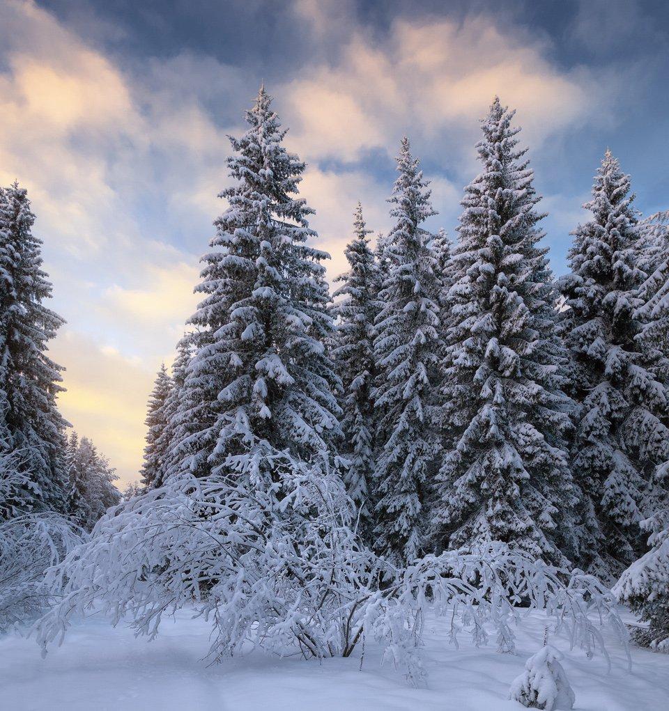 зима, закат, лес, парк, мороз, ель, снег, вечер, зават, Смольский Евгений