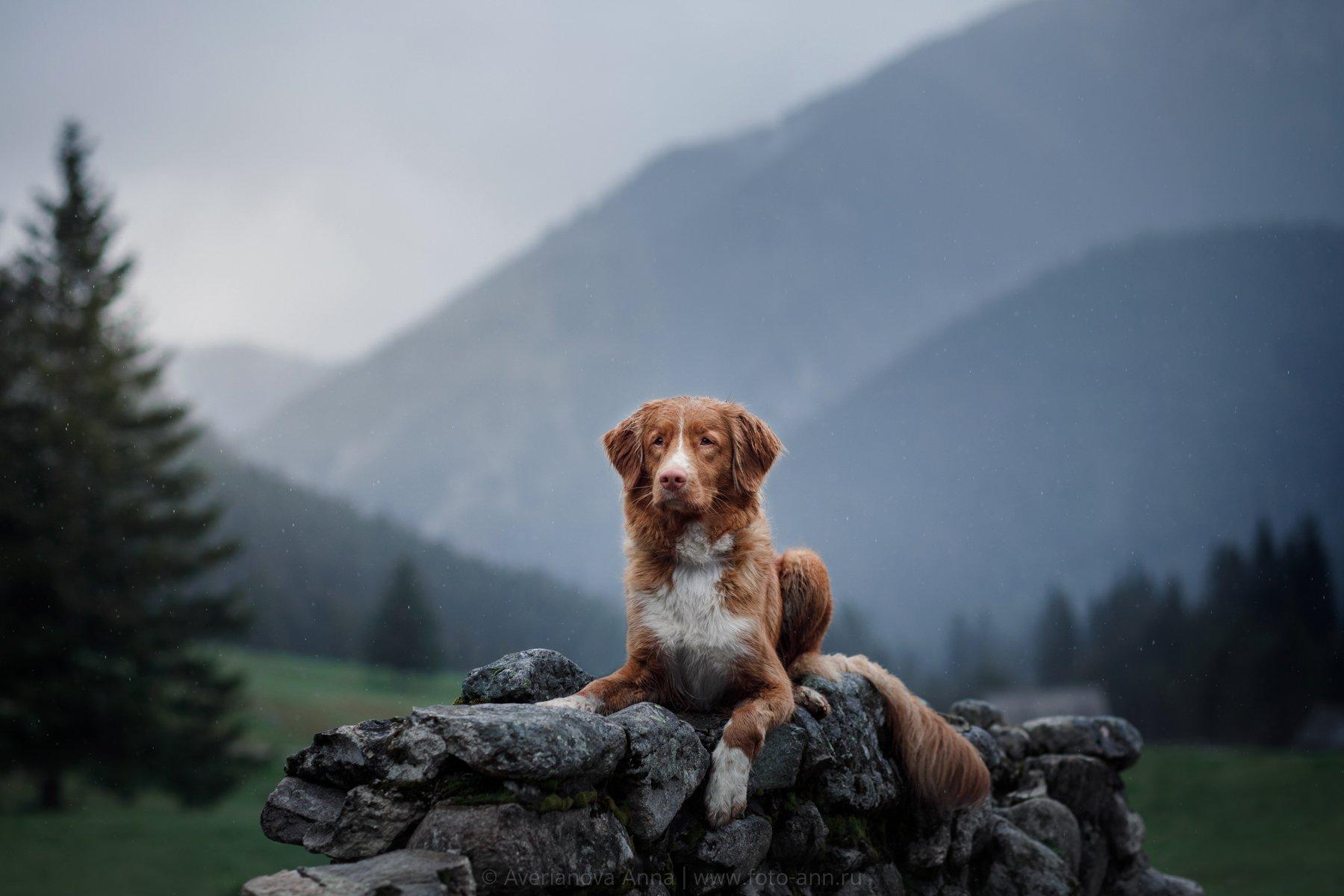 собака, горы, природа, Польша, Анна Аверьянова