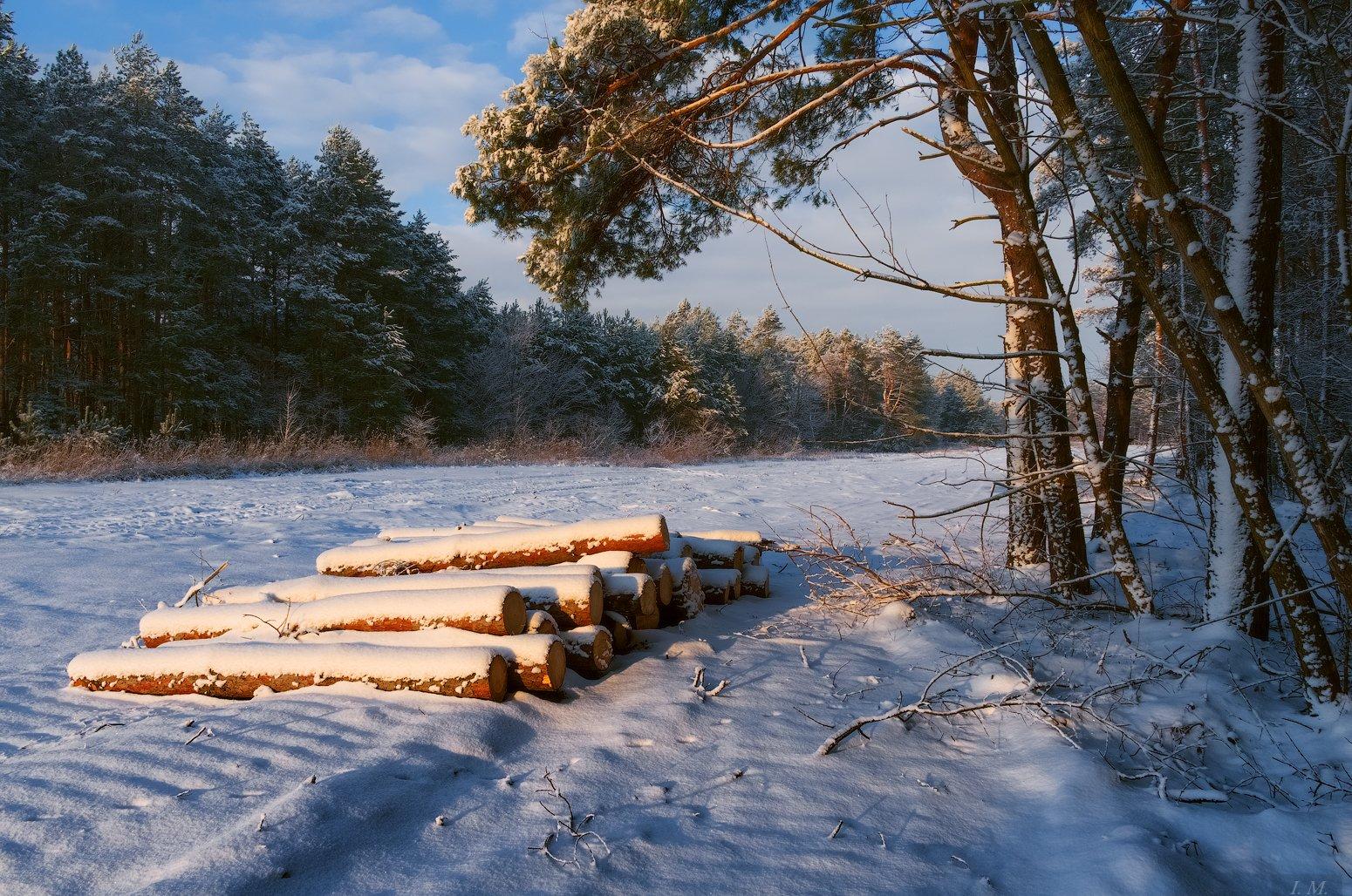 утро, деревья, зима, лес, пейзаж, снег, сосновый лес, опушка, pine, cold, forest, light, morning, snow, winter, trees, colors, Ivan Maljarenko