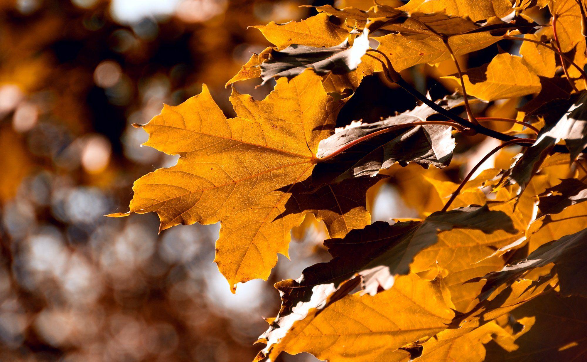 осень, природа, беларусь, лес, Sixten ( Сергей )