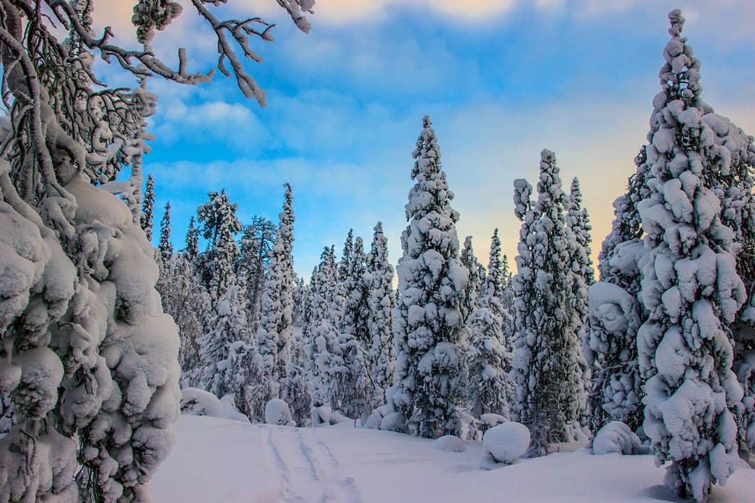 пейзаж, природа, солнце, сугробы, лес, снег, Салтыкова Алёна
