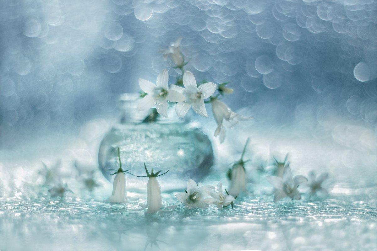 campanula,biale,kwiaty,makro,martwa,natura,przyroda, Grażyna Nowotna
