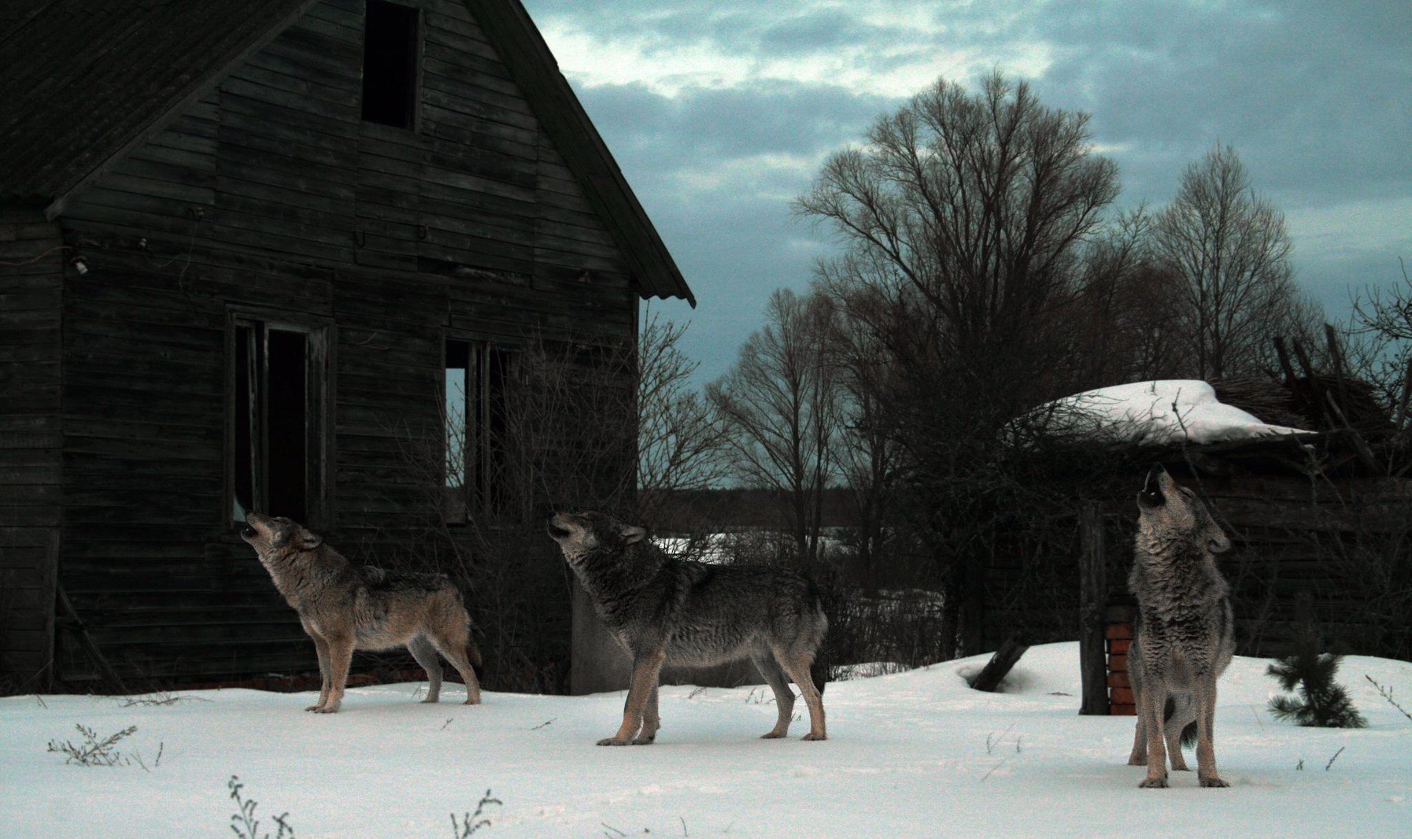 Чернобыль.Волки.Вой.Снег., Илья Бышнёв