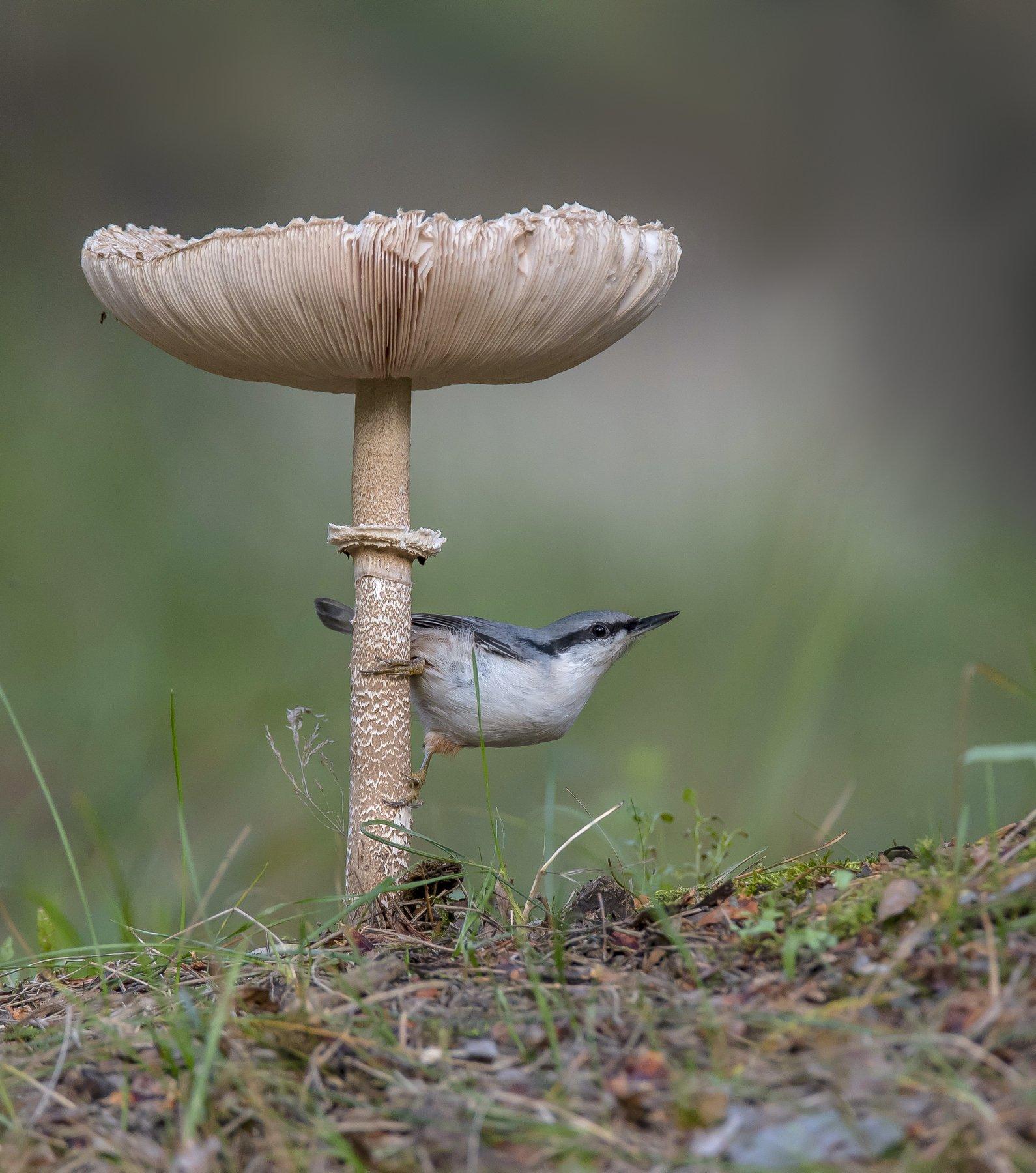 природа,лес,грибы,лето, Киселёв Андрей