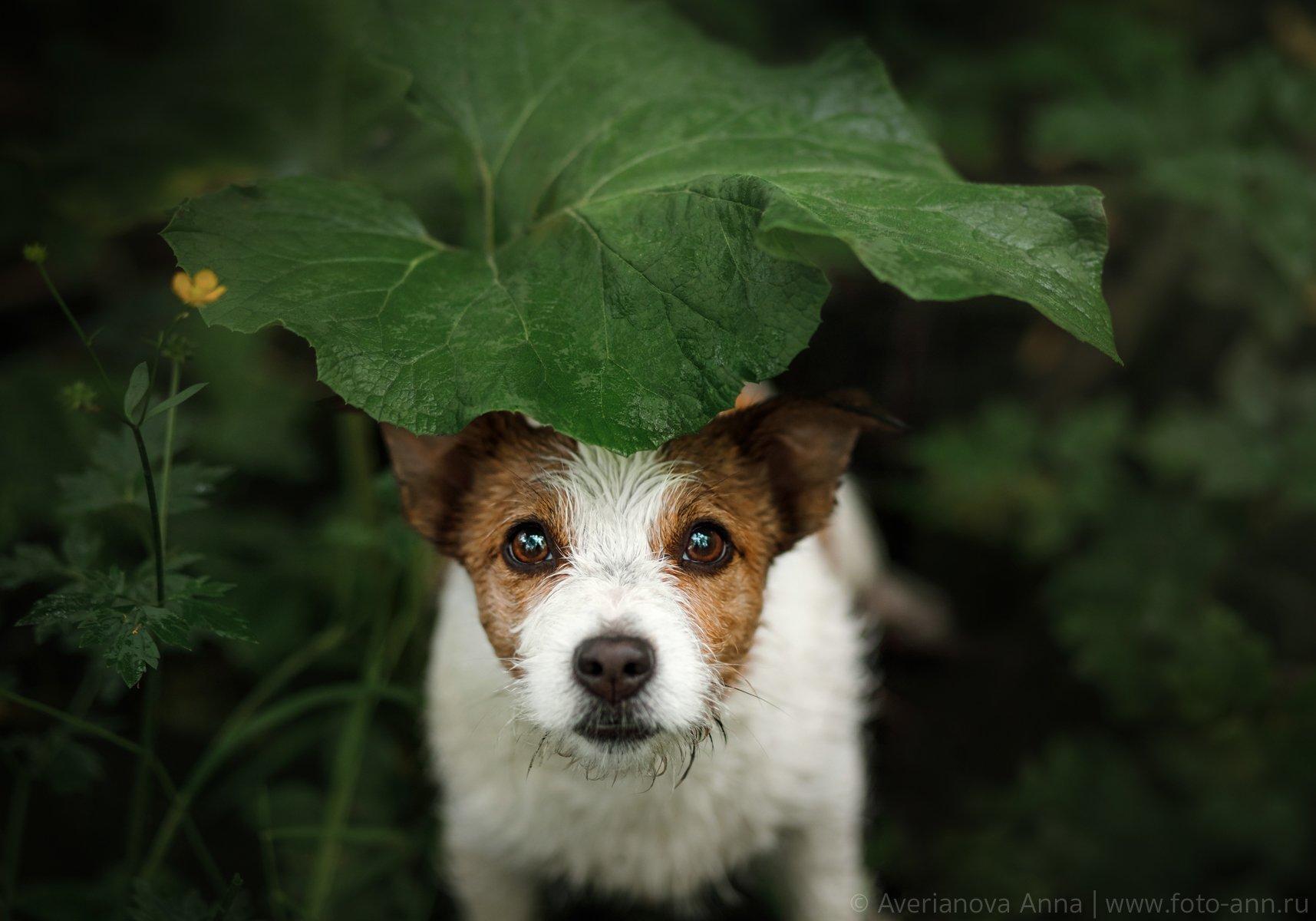собака, природа, дождь , Анна Аверьянова