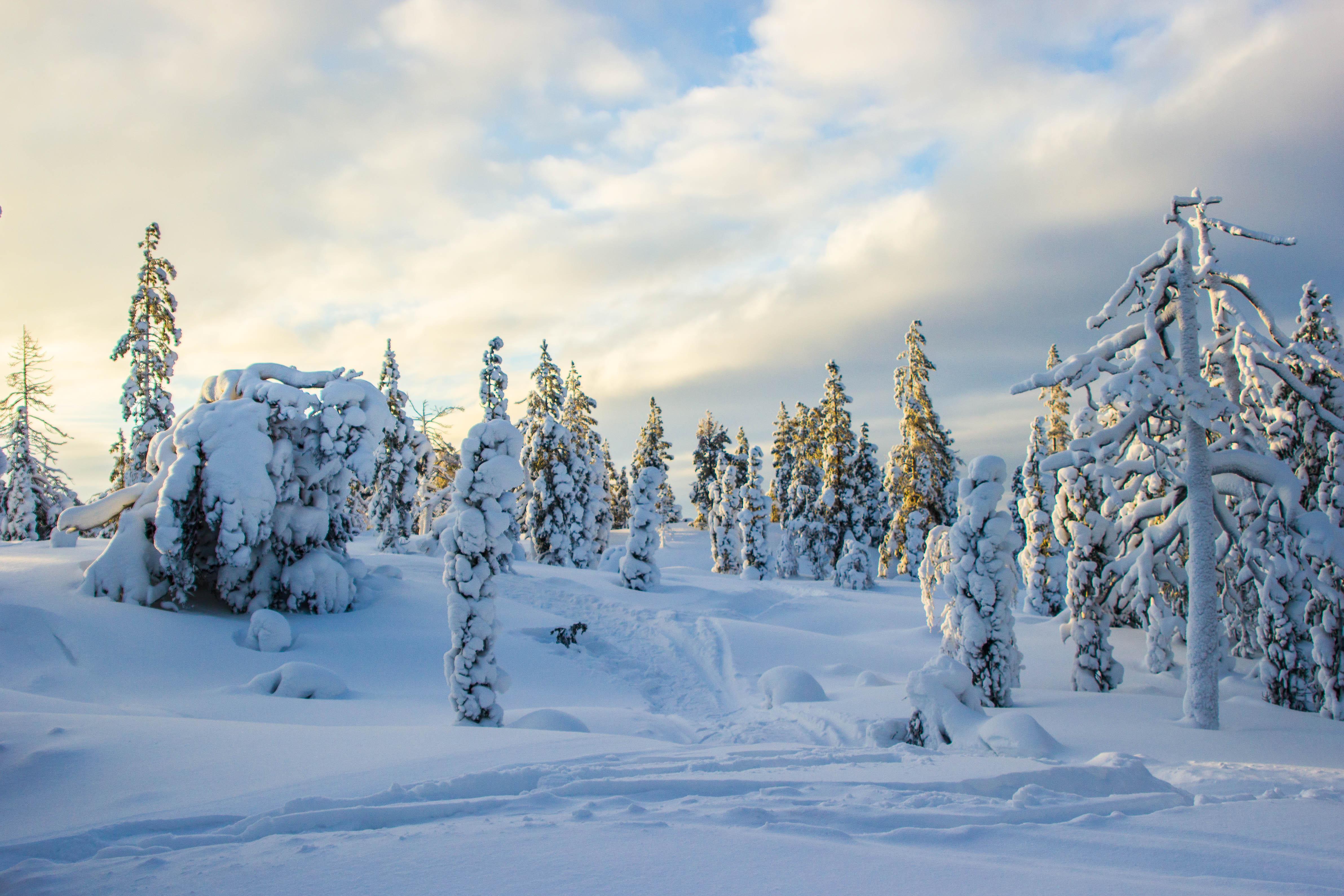зима, сосны, ели, солнце, снег, закат, природа, кольский край, небо, мороз, кандалакша, пейзаж, сугробы, sun, nature, winter, sunset, landscape, Салтыкова Алёна