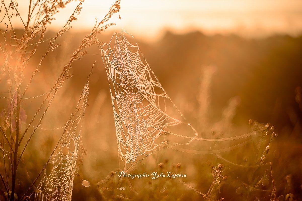 природа,паутина,лето,рассвет,гелиос,туман,утро,россия, Юлия Лаптева