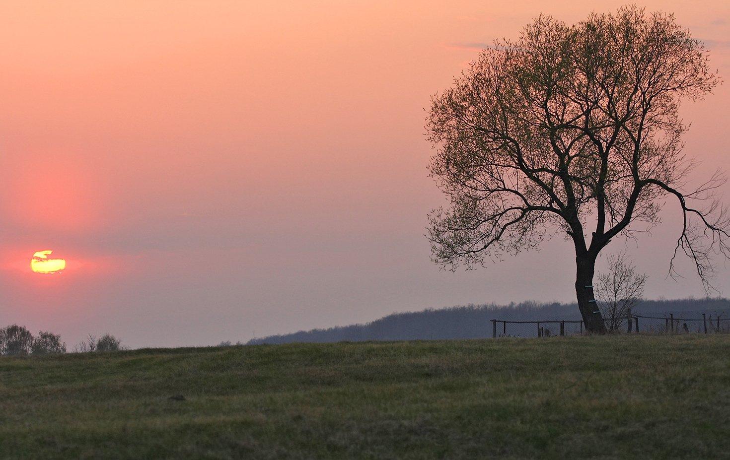 ветла закат одиночество, Сергей Сидоров