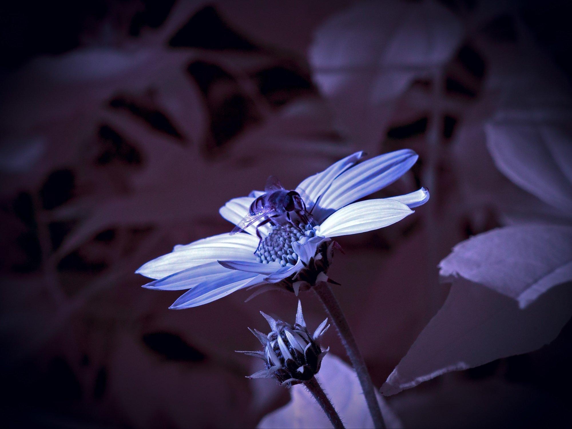 infrared,ик-фото,инфракрасное фото,инфракрасная фотография,природа,беларусь,осень, Sixten ( Сергей )