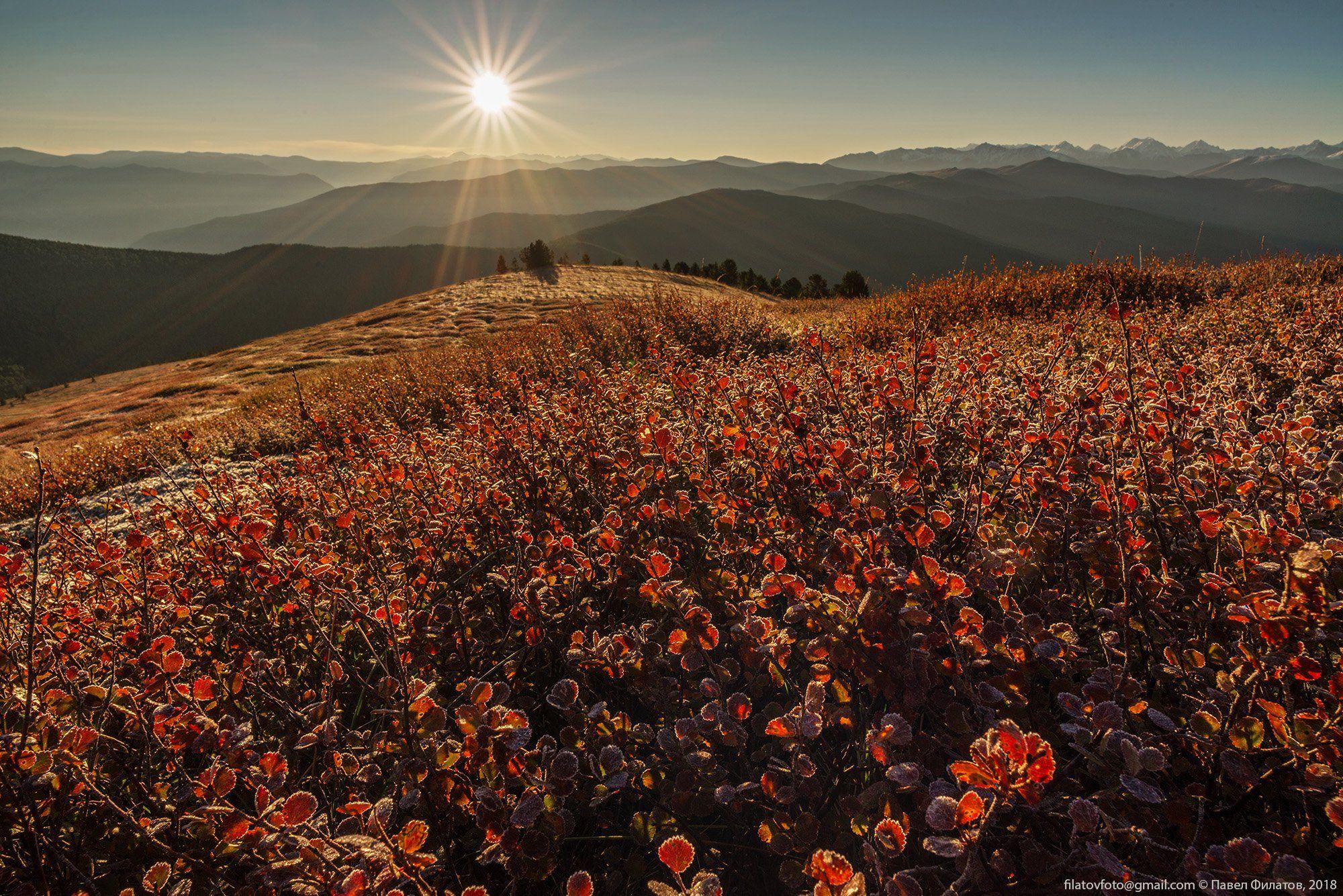 алтай, сибирь, березка, осень, солнце, Павел Филатов