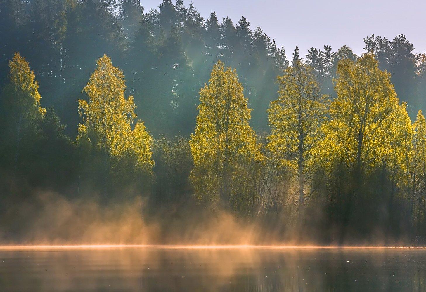 карелия, ладожское озеро, рассвет, скалы, деревья, лес, берёзы, отражение, туман, весна,, Лашков Фёдор