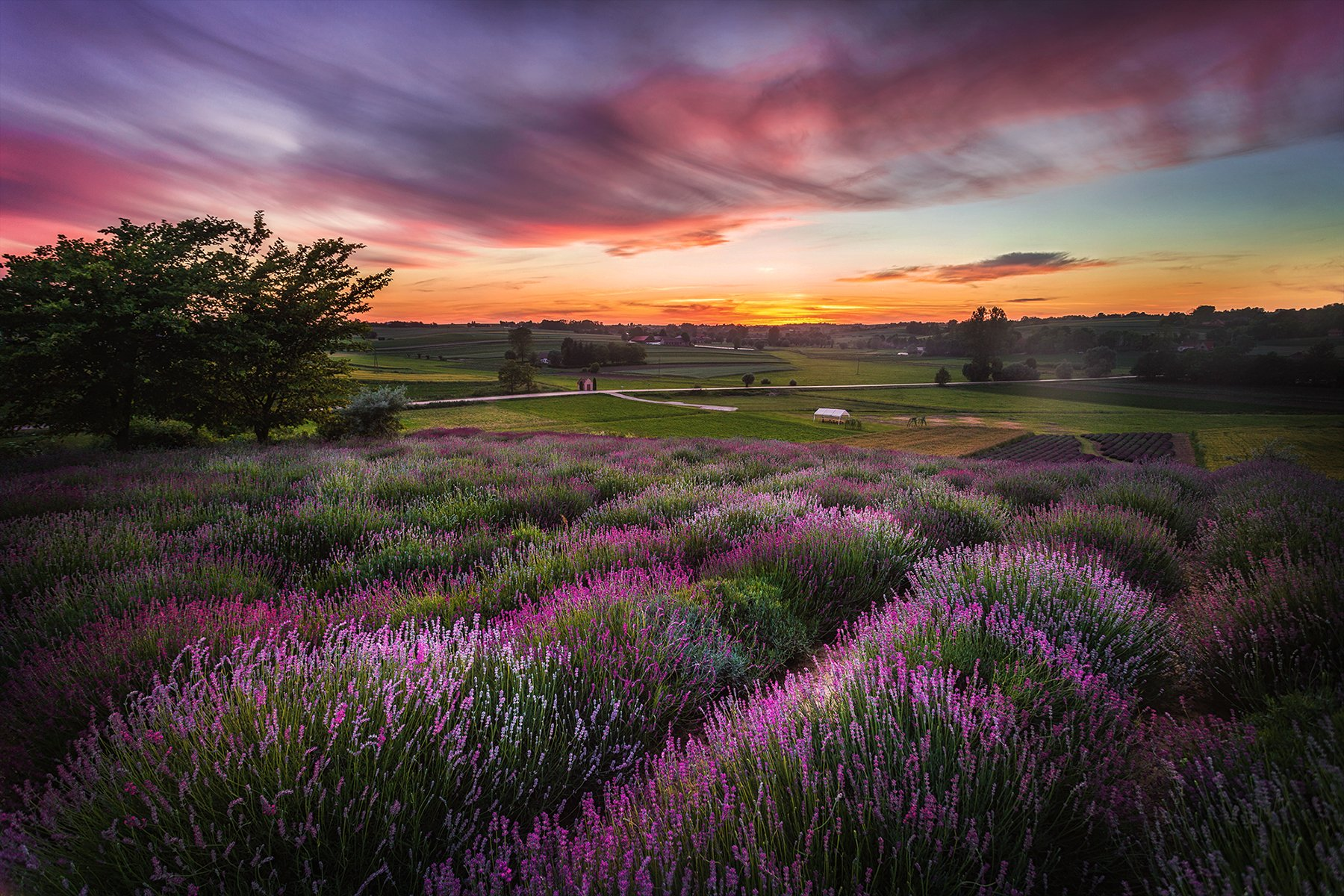 field, lavender, sunset, sunrise, Poland, bushes, Poland, garden, , Patrycja