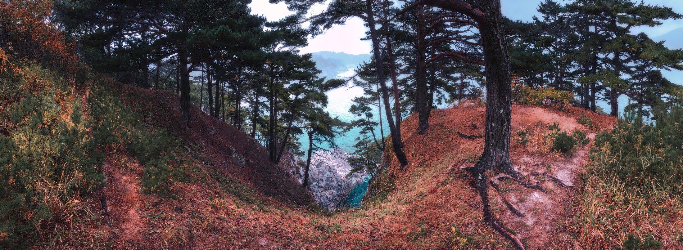 панорама, осень, сосны, море, скалы, Андрей Кровлин