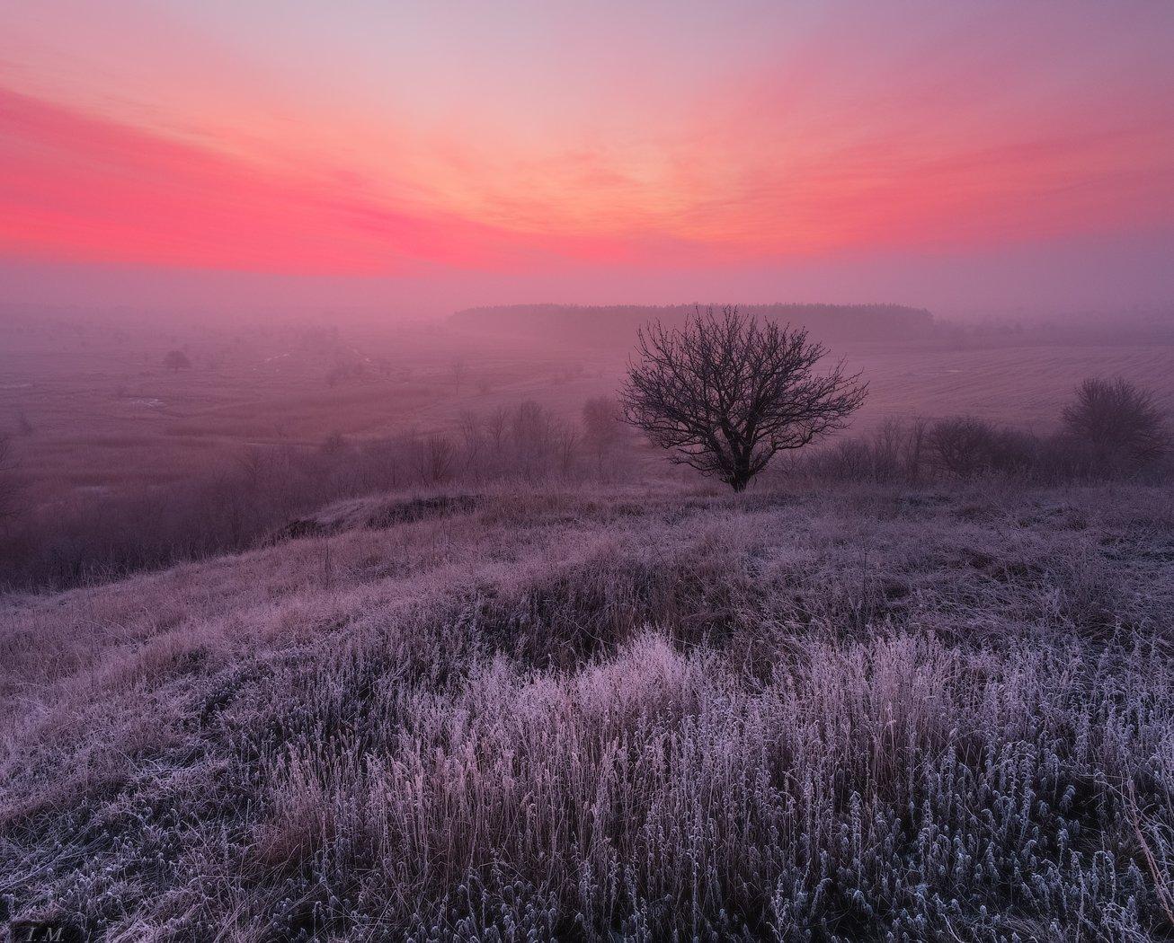 Landscape, light, mood, morning, nature, panorama, sky, sunrise, winter, дерево, иней, панорама, пейзаж, природа, рассвет, свет, туман, Утро, холмы, hills, Magic, colors, frost, foggy dawn, countryside, Ivan Maljarenko