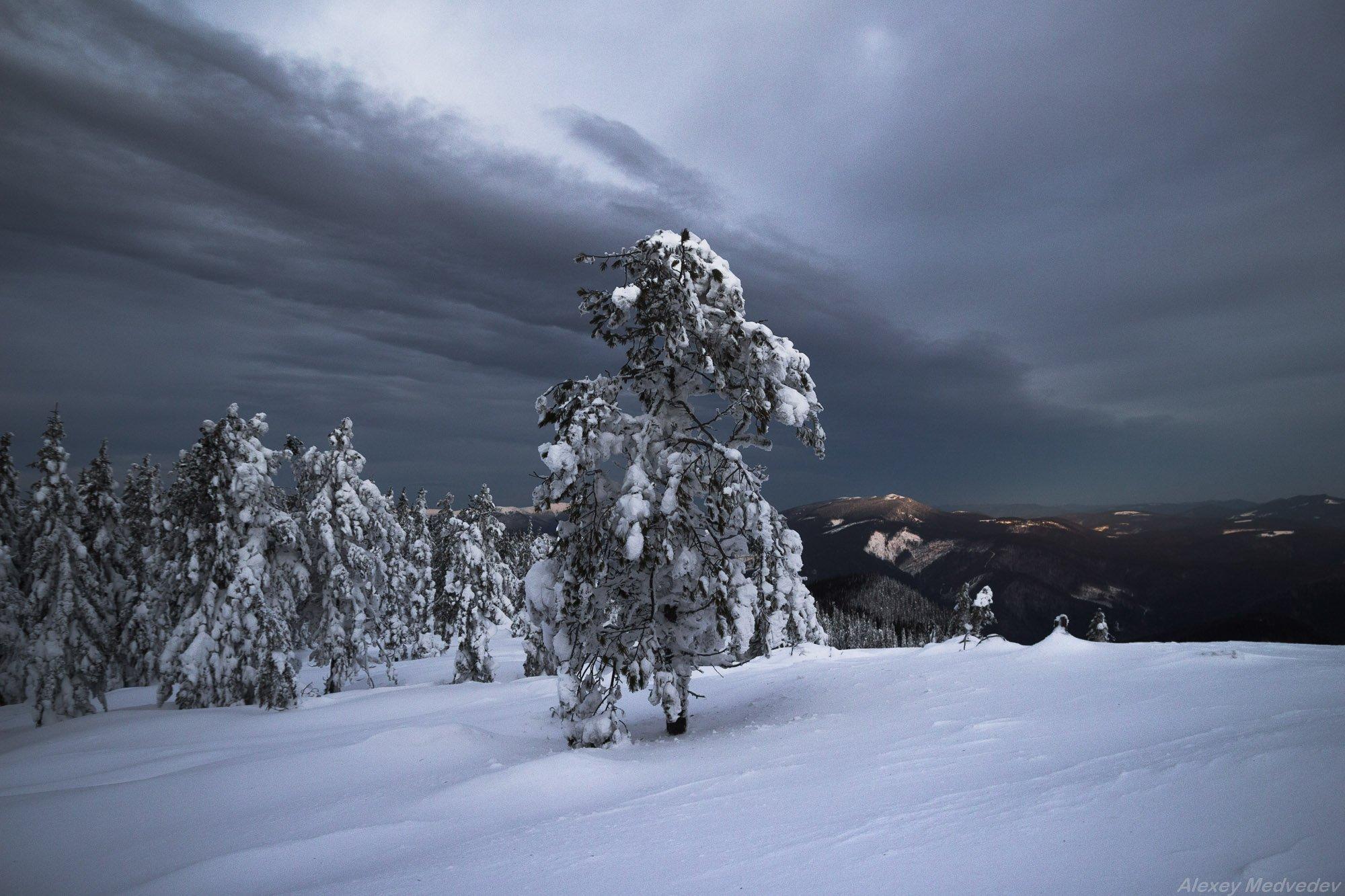 winter, white, frost, snow, carpathians, ukraine,  carpathians, alone, mountains, горы, зима, холод, Карпаты, горганы, Алексей Медведев