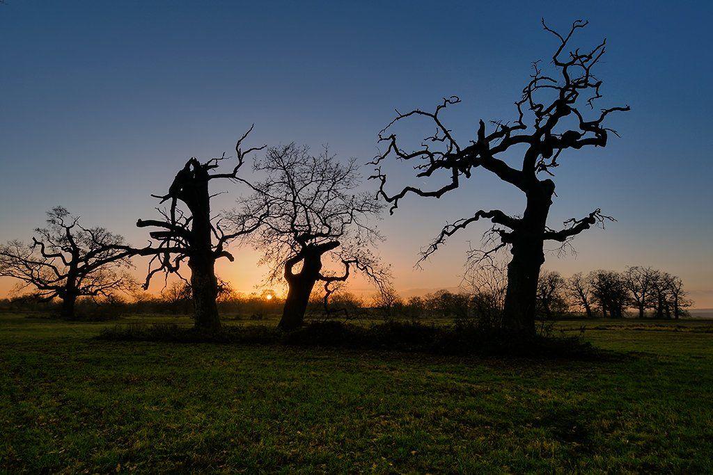 tree, trees, sunset, oak, meadow, Ryszard Orzechowicz