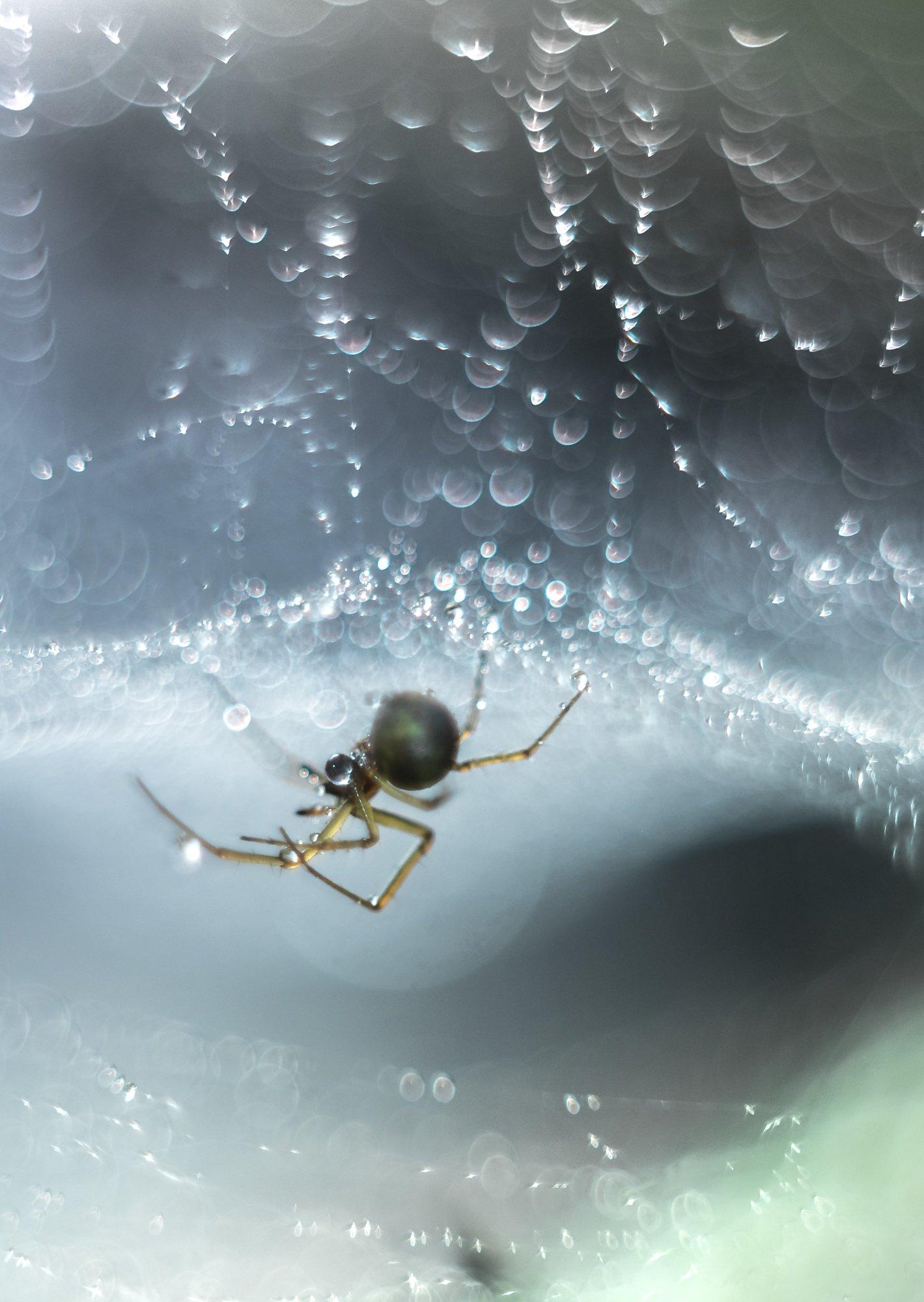 spider, insect, macro, helios 58mm, f/2,, Sylwia Grabinska