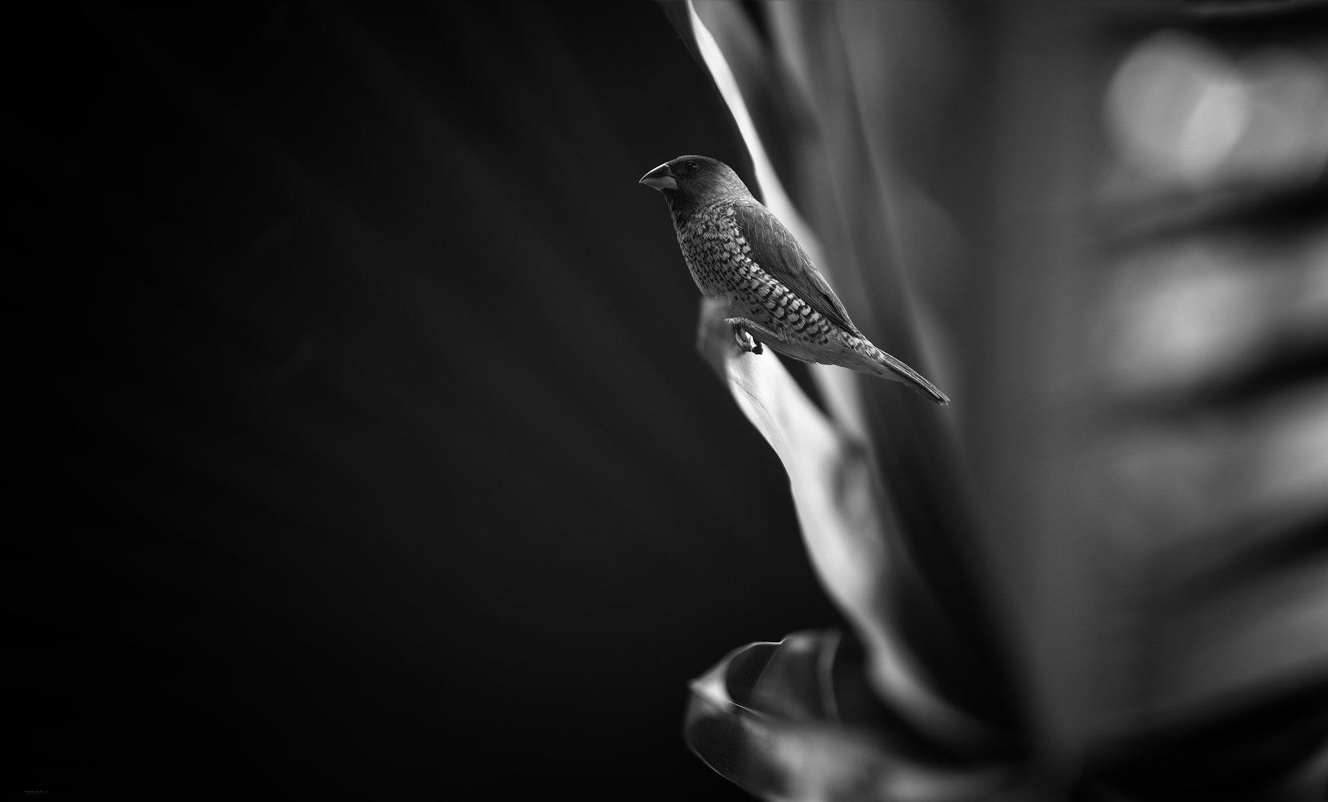природа, животные, птицы, индонезия, Дмитрий Посевич
