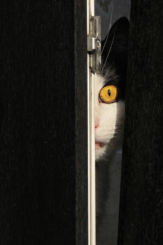 окно, створка, рама, кот, глаз, всевидящее око, слежка, надзиратель, надзор, Alla Sokolova