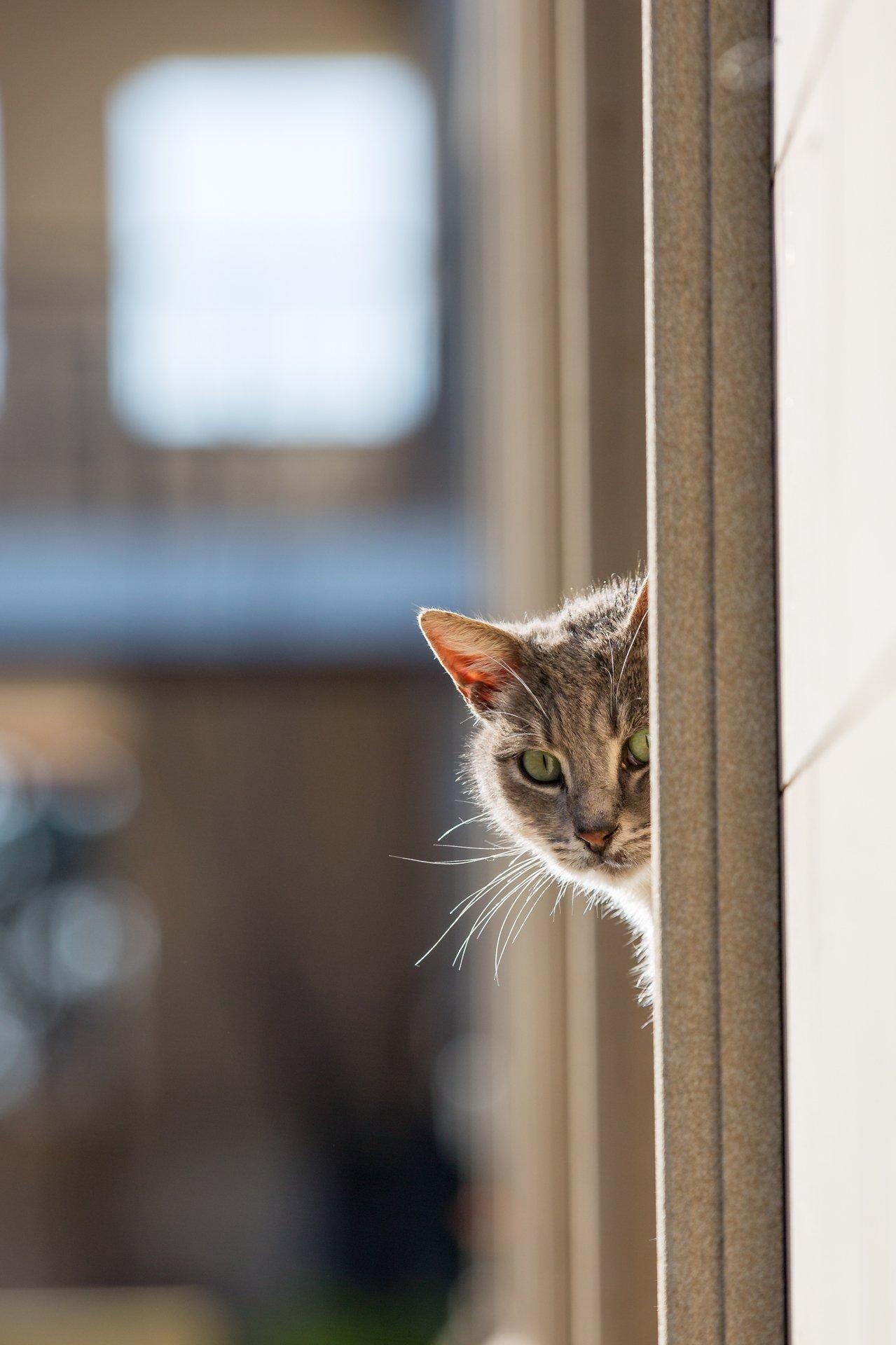 кот, кошки, монастырь, кипр, смешной, подглядывать, Илья Беленький