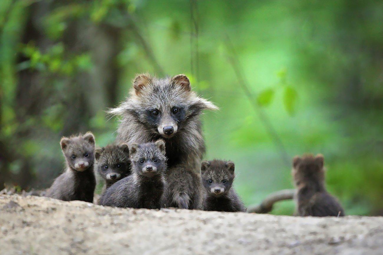 wildlife, woods, forest, Adam Fichna