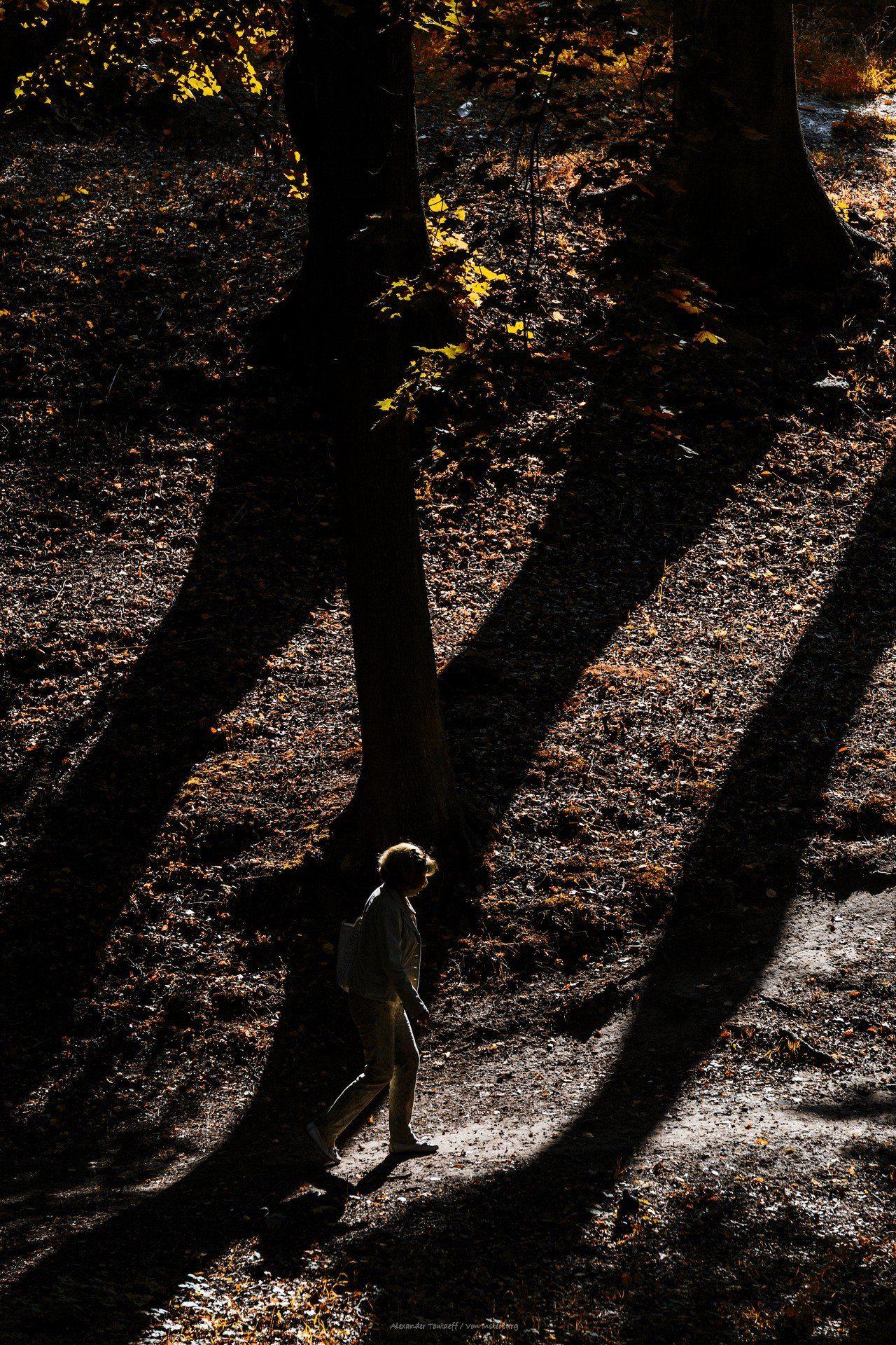 Люди, город, улица, жанр, свет, тени, человек, деревья, парк, осень, , АлександрТутаев