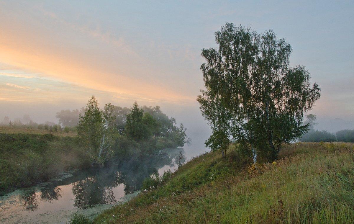 утро, природа, пейзаж, берёзы, склон, Михаил Агеев
